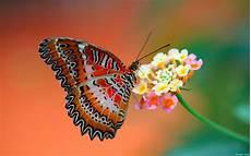 Malvorlage Schmetterling Blume Schmetterling Auf Der Blume