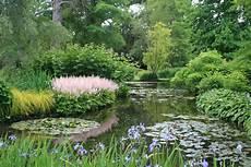purple kaboodle longstock park water garden purple kaboodle