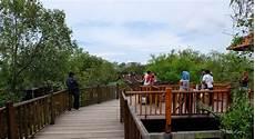 Ekowisata Mangrove Wonorejo Hutan Bakau Yang Ada Di