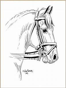 die besten ideen f 252 r pferde ausmalbilder dressur beste