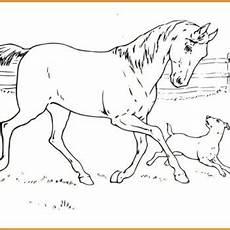 ausmalbilder hunde und pferde ausmalbilder pferde und hunde rooms project rooms project