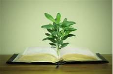 forex books not plants in the bible used as medicine corrupted advindicate