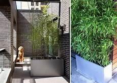bambou pot terrasse pivoine etc