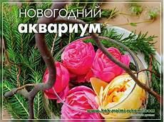 Blumenaquarium Selber Machen Zum Neujahr Fotos Mach Es