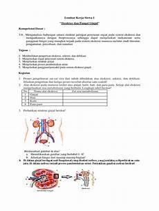 Jelaskan Proses Pembentukan Urin Pada Ginjal Manusia