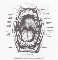 Anatomi Landmark Rongga Mulut Den To Sca Notes