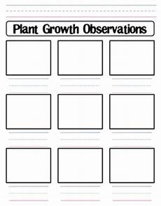 plant growth worksheet for grade 2 13757 plant growth observation wo by shannon allison teachers pay teachers