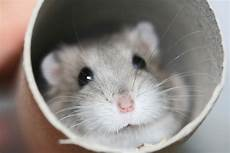 Free Wallpaper Archive 10 Hamster Wallpapers