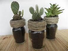 vasi per cactus caratteristiche dei vasi per piante grasse scelta dei
