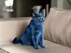 blue cats smarties blue cat commercial