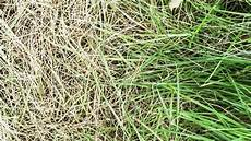rasen pflegen nach winter substral rasend 252 nger schneller gr 252 n 100 m 178 3 8 kg