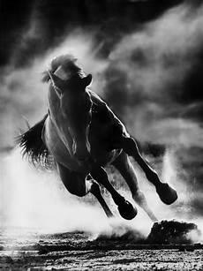 cette photo montre la puissance des chevaux black