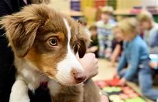 bar a chien lille lille la ville accueille le premier bar 224 chiens d europe