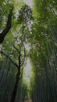 Wallpaper Iphone Tree