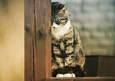 Foto Dan Gambar Kucing Sedih Fanicat