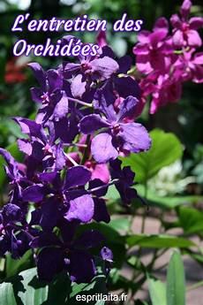 comment soigner une orchid 233 e entretenir orchid 233 e