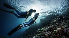 what is freediving