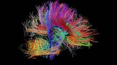 brain wiring diagram how the brain s wiring forms thoughts and emotions