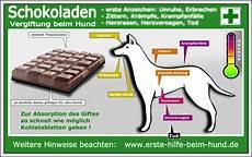 hund schokoladenvergiftung docgoy