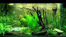 aquarium juwel 125 f 252 tterungszeit