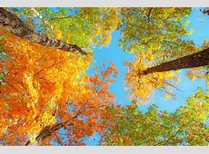 [69 ] Fall Foliage Wallpaper on WallpaperSafari