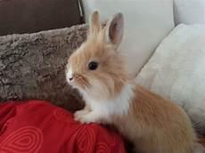 wie lange darf ich meinen kaminofen noch betreiben ab wie viel wochen darf ich meinen kaninchen nass frischfutter geben essen haustiere alter