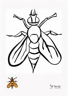 Bilder Zum Ausmalen Insekten Ausmal U Fensterbilder