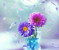 Beautiful Flower Wallpaper Zedge by Colorful Flowers Hd Zedge Colorful Flowers
