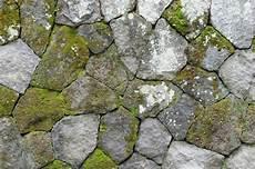 moos steinen entfernen moos und flechten bek 228 mpfen 187 so gehen sie vor