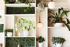 Plantes 15 Vari 233 T 233 S D 233 Polluantes Pour Votre Int 233 Rieur
