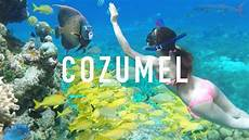 cozumel snorkeling tips creepy animals youtube