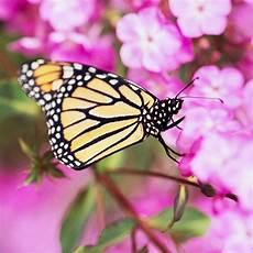 17 Blumen Und Pflanzen Die Schmetterlinge Im Garten