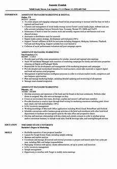 assistant manager marketing resume sles velvet