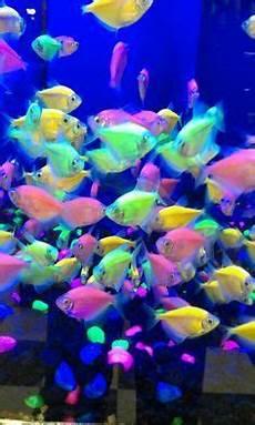 black light aquarium search aquarium scrubdown pinterest aquariums
