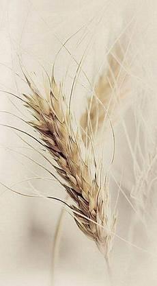 diana azzato adlı kullanıcının wheatfields of milk honey panosundaki resimler resim