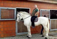 Tamme Hanken Pferd - tamme hanken der feinf 252 hlige knochenbrecher ist tot