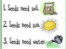 primary ks1 science how to plant a seed by sheath19 308 teaching resources