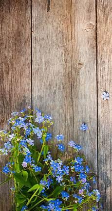 free flower wallpaper for phone the 25 best flower iphone wallpaper ideas on