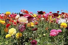 bloeiende bloemen stock afbeelding afbeelding 19575121