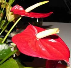tropical flower 2 by fantasystock on deviantart