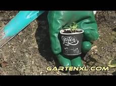 Mein Kleiner Biogarten - endivie einpflanzen mein kleiner bio garten real
