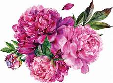 peony clipart best bouquet illustrations royalty free vector graphics
