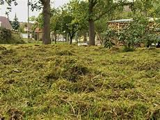 rasenpflege plath gartenbau landschaftsbau