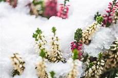 fiori profumati da giardino fiori invernali quali sono un elenco dettagliato
