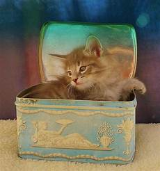 the kittens are 6 weeks i love to the felines por los felinos kittens cutest