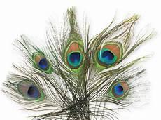 plume de paon 25 30 cm x1 perles co