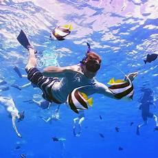 molokini snorkeling molokini turtle town fun