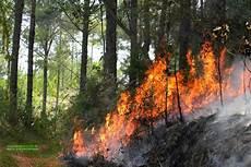 Pelepasan Kawasan Hutan Biang Kerok Kebakaran Mengapa