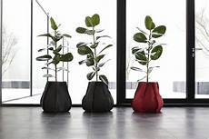 vasi arredo design piante arredo interno ku59 187 regardsdefemmes