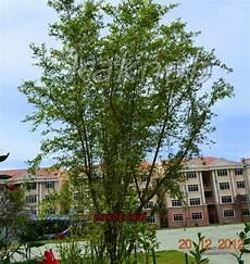 Pokok Herba Bunga Ulaman Dan Segala Jenis Tumbuhan Pokok